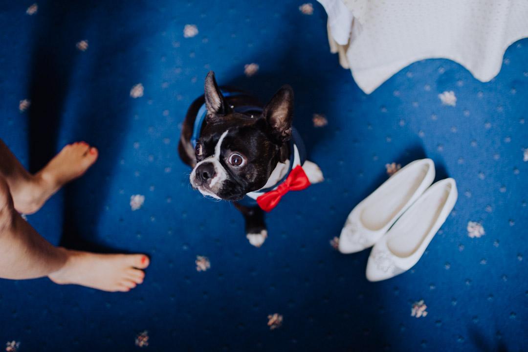 Hund bei den Hochzeitsvorbereitungen